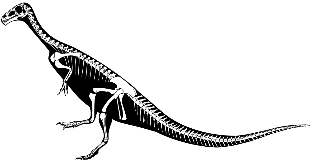 Image: Skeleton reconstruction of Chilesaurus. Image Credit: Jaime A. Headden
