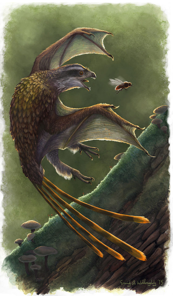 Restoration of the membrane-winged scansoriopterygid Yi (dinosaur). Emily Willoughby, (e.deinonychus@gmail.com, emilywilloughby.com)