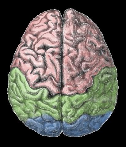 Human Brain. Credit: Gutenberg Encyclopedia, Wikimedia.
