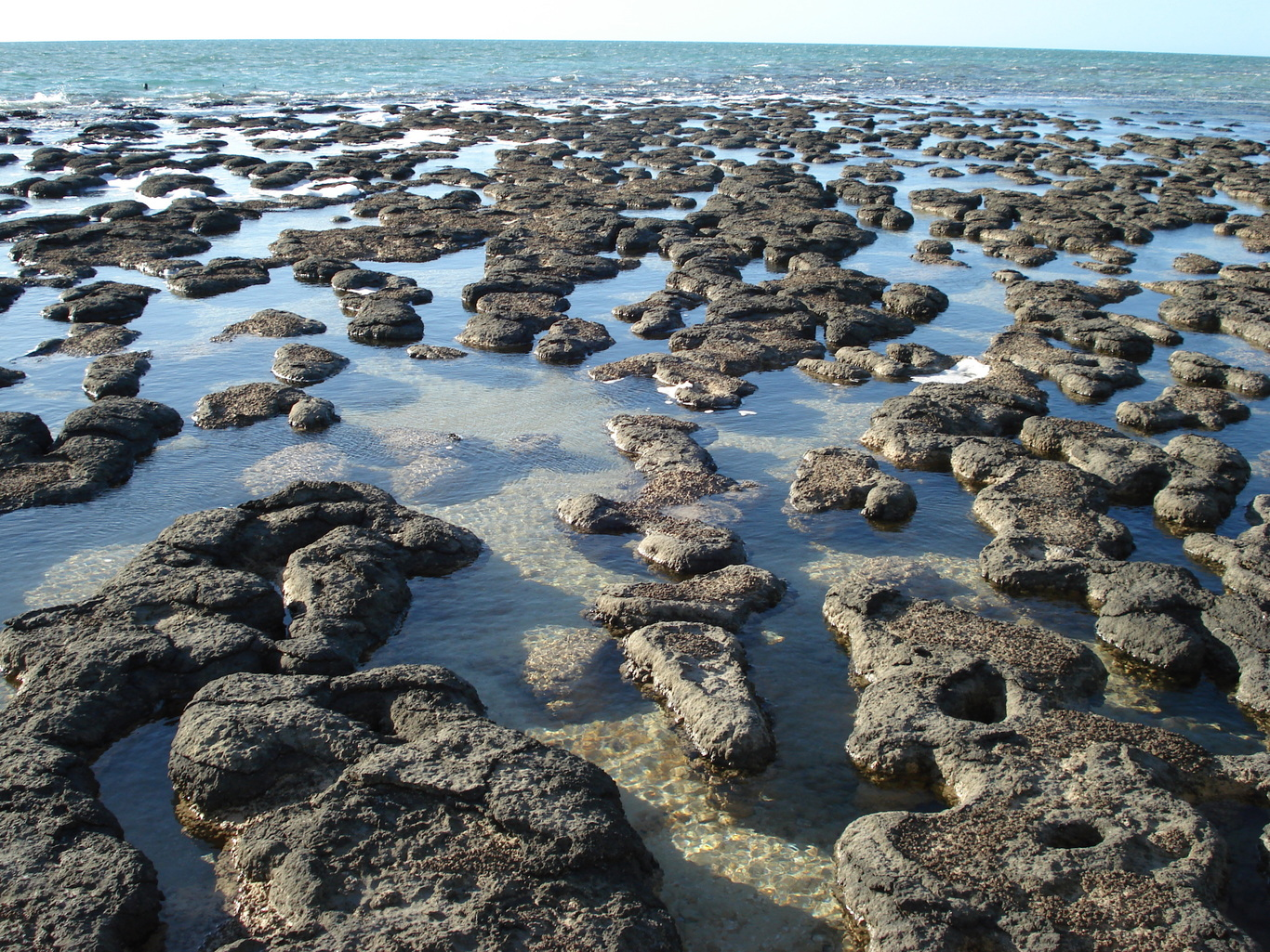 Stromatolites at Shark Bay in Western Australia. Flickr/Paul Morris, CC BY