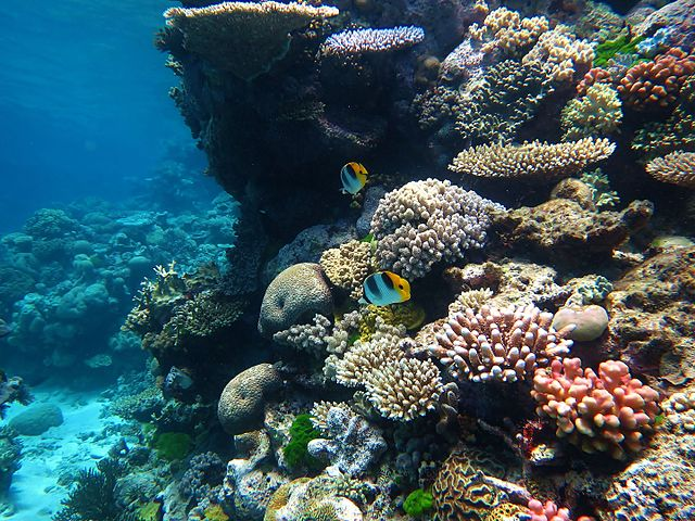 Great Barrier Reef. Image credit: Wise Hok Wai Lum, Wiki.